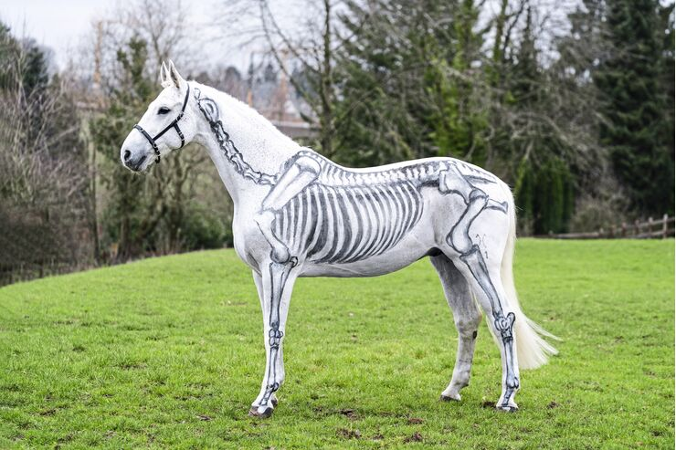 Anatomie-Serie