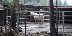 CA Reitschultest 0606 Chrissys Ranch4 (jpg)