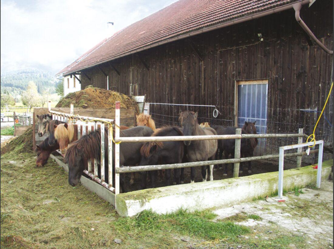 CA Reitschultest 1206 Alpenhof4 (jpg)