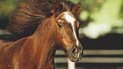 CAV 01_2010_Wie alt ist mein Pferd_02 (jpg)