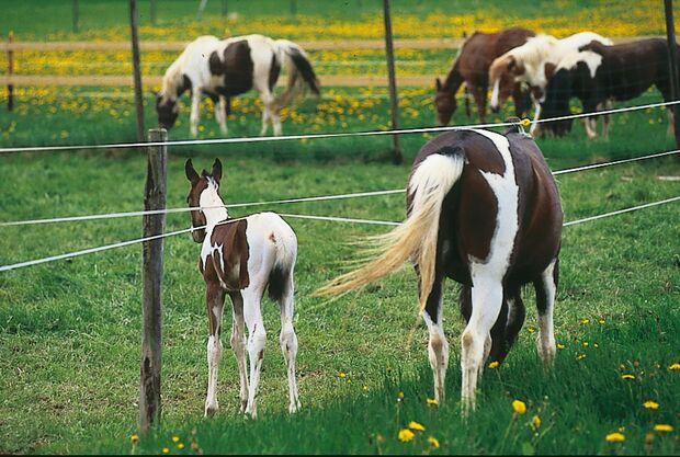 CAV 0108 Gesetzt den Fall Bild Weide Fohlen 10