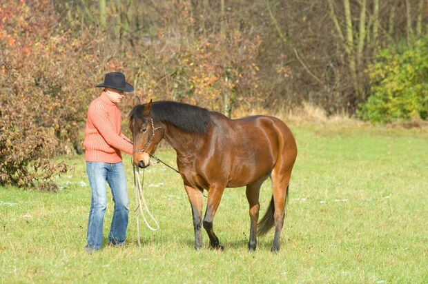 CAV 0108 Gurutest - Blaha mit Pferd