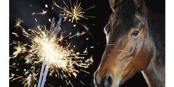 CAV-0111-10-Fragen-Pferd-Sylvester-Angst (jpg)