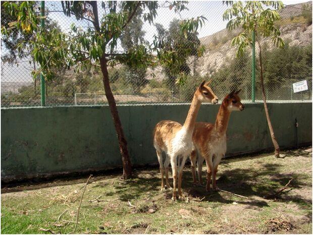 CAV 0111 Peru_02 (jpg)
