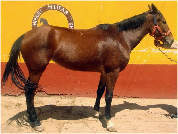 CAV 0111 Peru_07 (jpg)