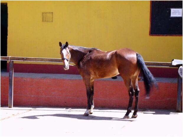 CAV 0111 Peru_08 (jpg)