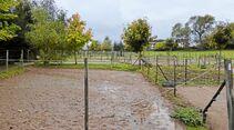 CAV-0114-Reitschultest-Hoelzleshof-2 (jpg)