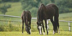 CAV 0210 Pferd Pur Schuesslersalze 1 (jpg)
