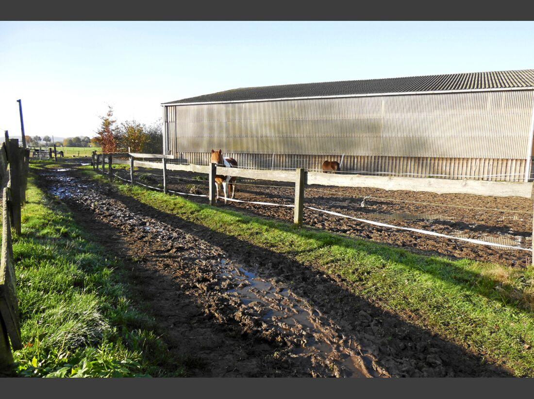 CAV-0214-Reitschultest-Heideteil-3 (jpg)