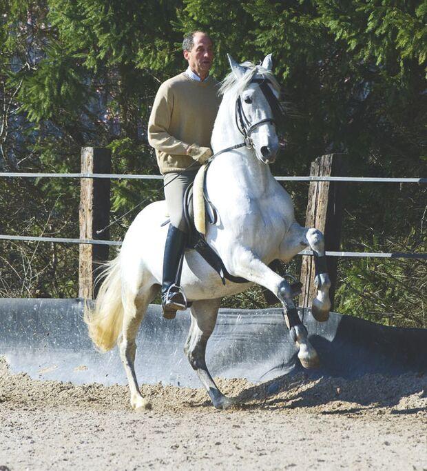 CAV 03_2010_01 Pferdelaunen _Flitzlaune_LIR3389 (jpg)