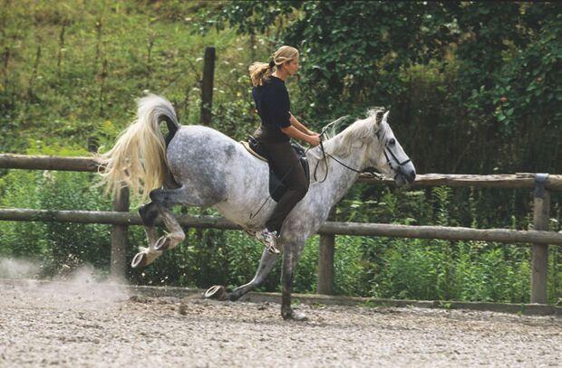 CAV 03_2010_01 Pferdelaunen _Huepflaune_238959_Stuewer (jpg)
