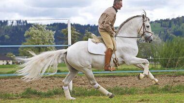 CAV 03_2010_01 Pferdelaunen _LIR4341 (jpg)