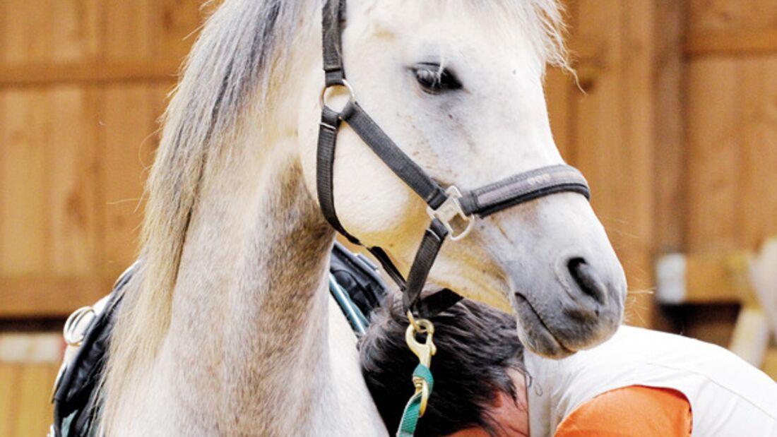 Frau lässt sich vom pferd decken