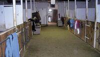 CAV_0311_Reitschultest_Horsefield-Ranch_1 (jpg)