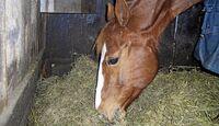 CAV_0311_Reitschultest_Horsefield-Ranch_2 (jpg)