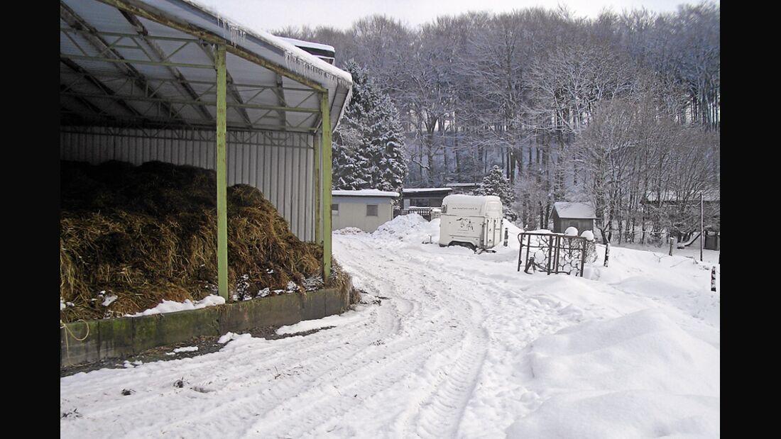 CAV_0311_Reitschultest_Horsefield-Ranch_3 (jpg)