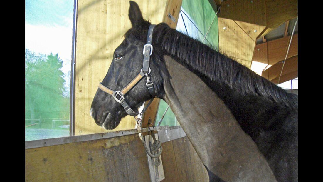 CAV-0312-Reitschultest-Lohausen-pferd (jpg)