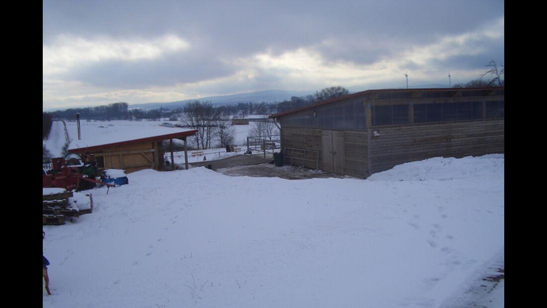 CAV-0313-Reitschultest-Islandpferdehof-Domaene-1 (jpg)