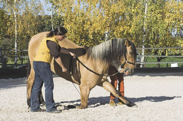 CAV 04_2010_Pferde richtig loben_04 (jpg)