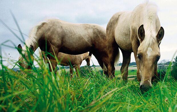 CAV_0408_tollwutimpfung_Pferde
