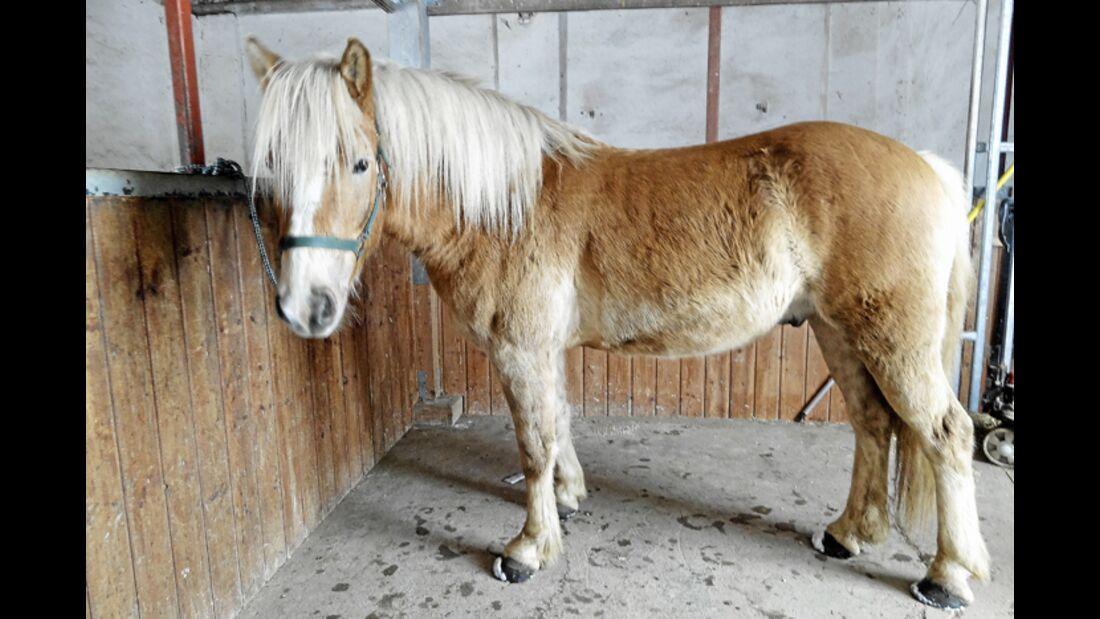 CAV-0412-Reitschultest-Riedmuehl-Ranch-Pferd (jpg)