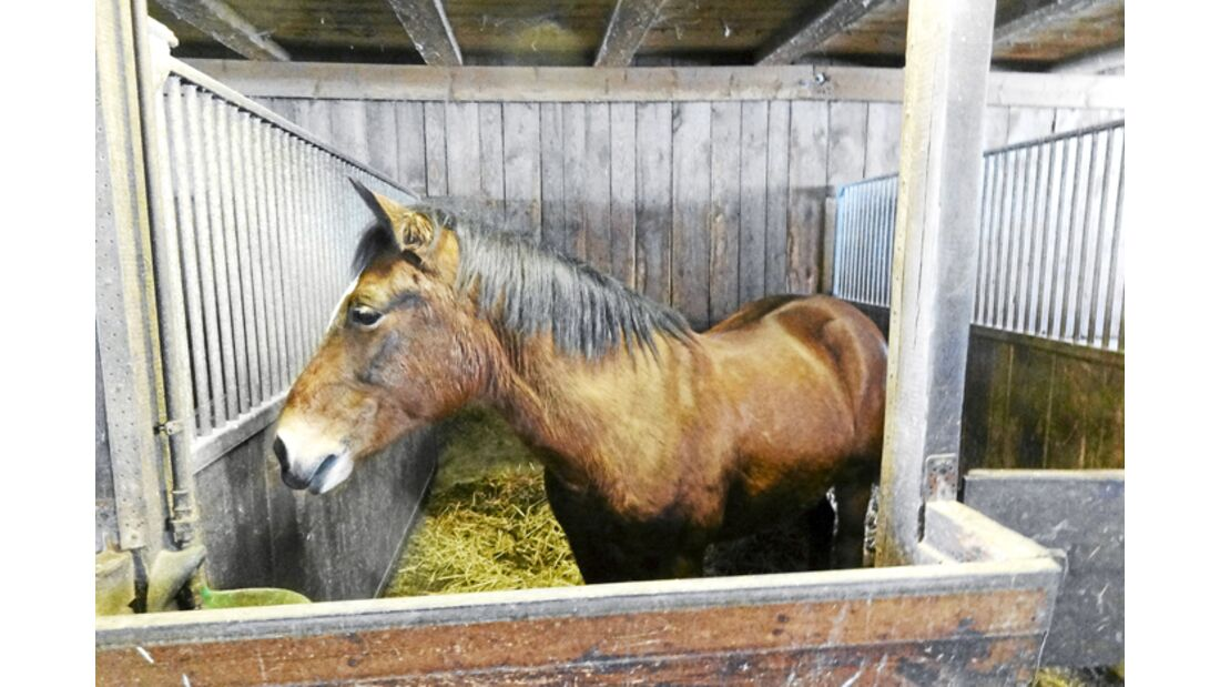 CAV-0412-Reitschultest-Wagner-Pferd (jpg)