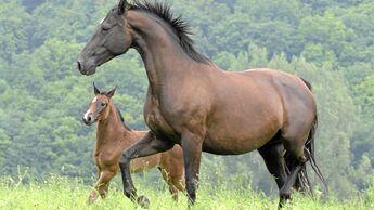 Die Schönsten Pferdebilder Unserer Leser Cavallo De