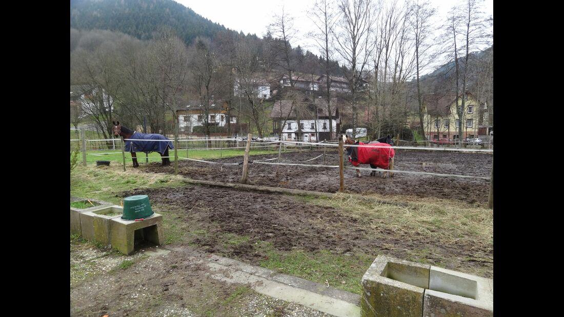 CAV-0413-Reitschultest-Kull Ranch 09_Landwehr