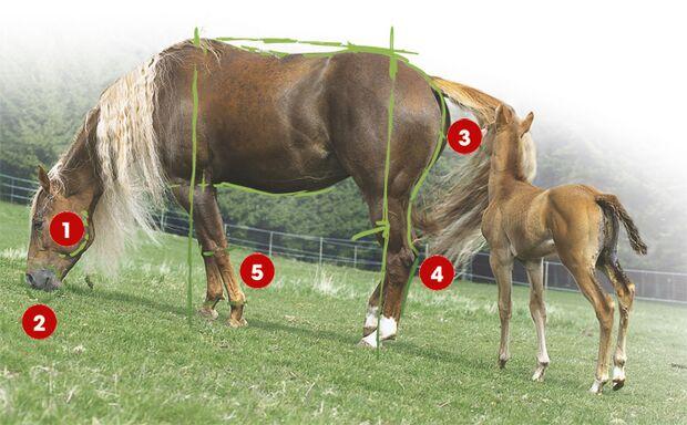 CAV 0503 Exterieur_Quarter Horses_02 (jpg)