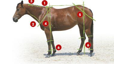 CAV 0503 Exterieur_Quarter Horses_05 (jpg)