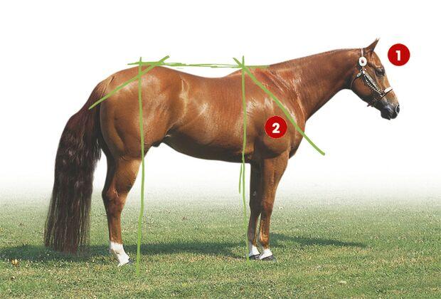 CAV 0503 Exterieur_Quarter Horses_06 (jpg)