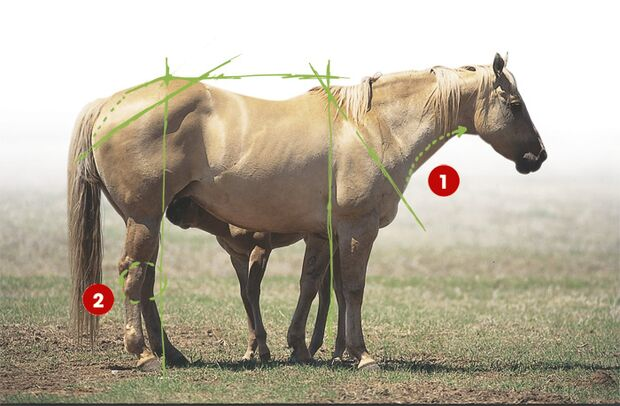 CAV 0503 Exterieur_Quarter Horses_07 (jpg)