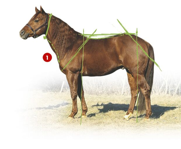 CAV 0503 Exterieur_Quarter Horses_08 (jpg)