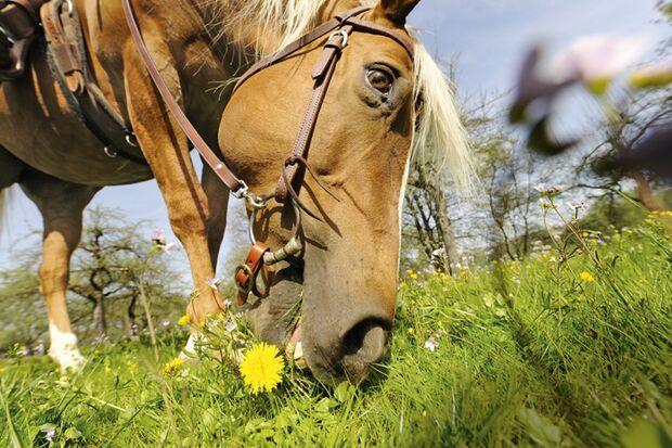 CAV 06_2010 Giftpflanzen_1Aufmacher_LIR5807 (jpg)