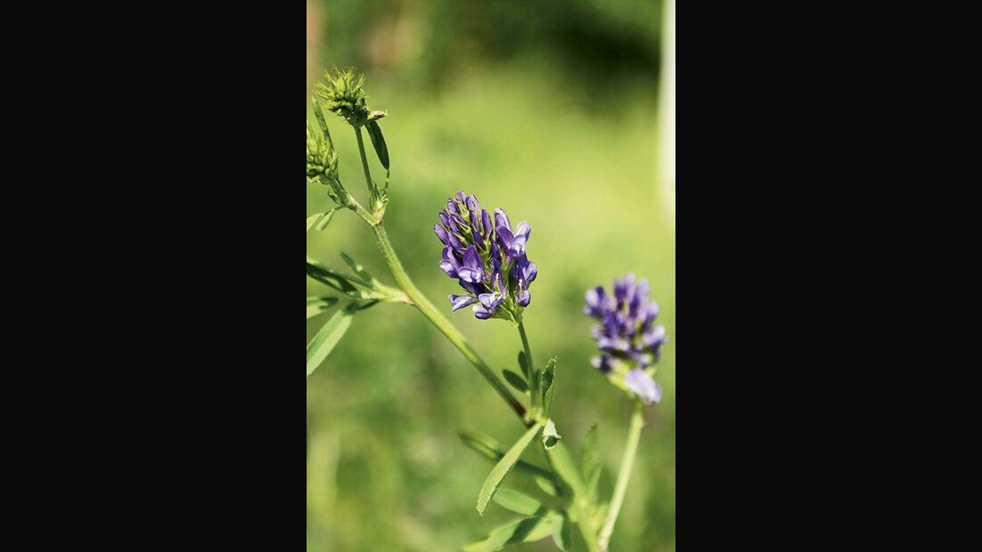 CAV 06_2010 Giftpflanzen_Fotolia_14486446_S (jpg)
