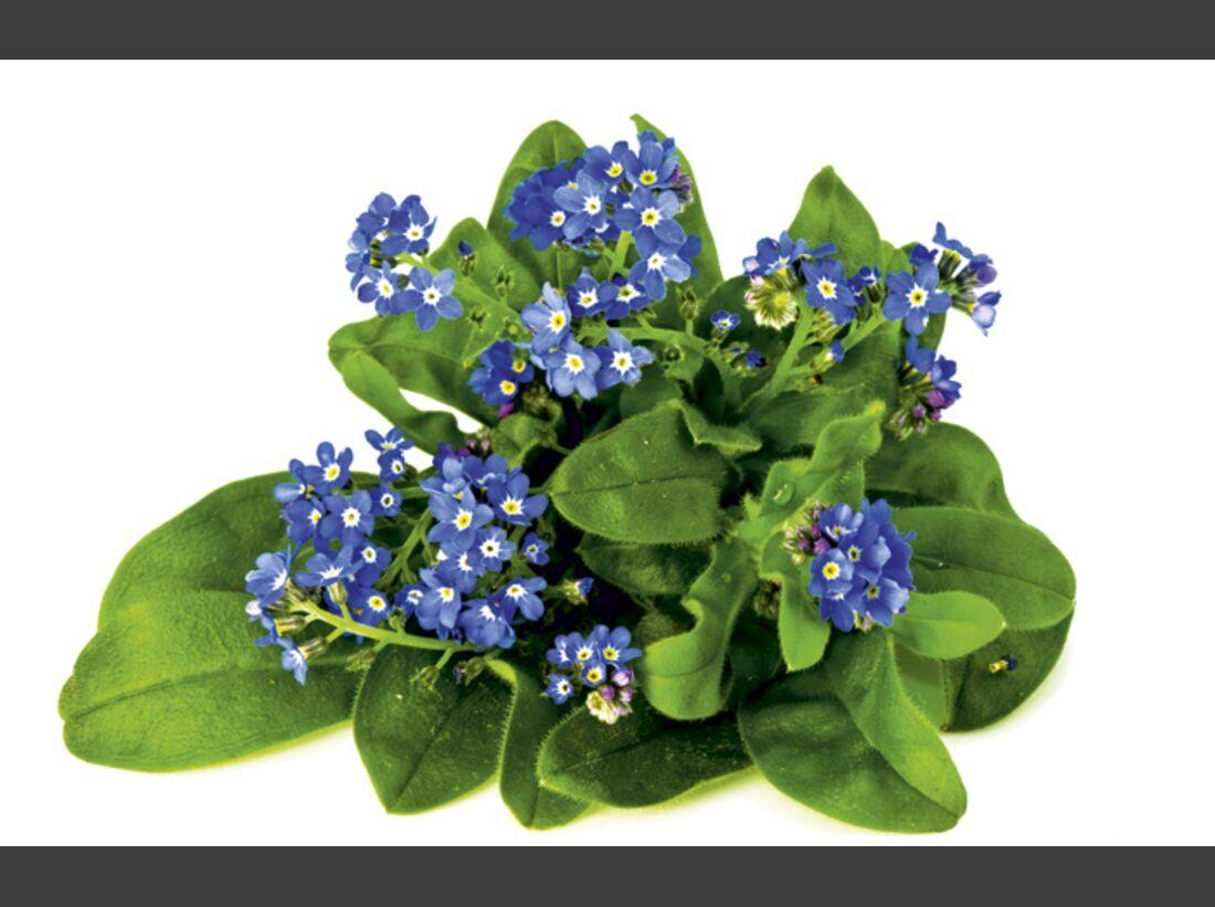 CAV 06_2010 Giftpflanzen_Fotolia_21558459_M (jpg)