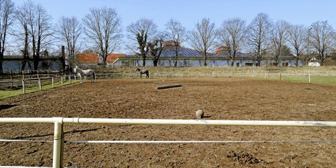 CAV-0612-Reitschultest-Ramstein-Koppel (jpg)
