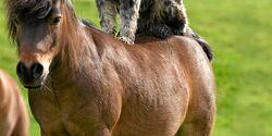CAV 0713 Expertentipps Pferd Hund