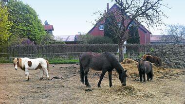 CAV-0714-Reitschultest-Hameln-Lucky-Rider-Ranch-3