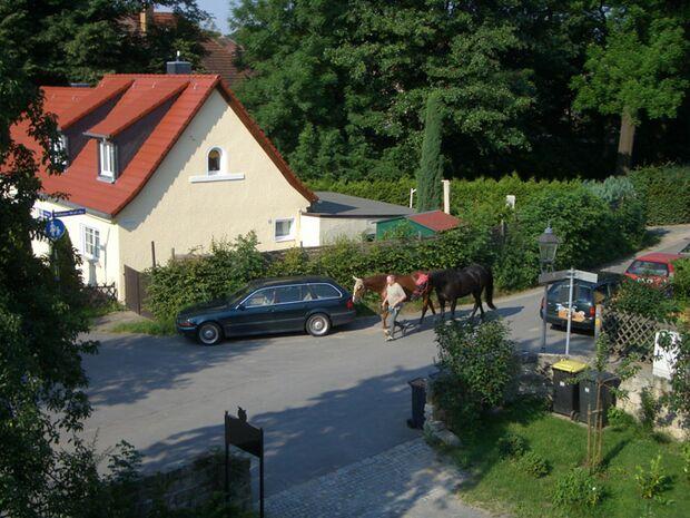 CAV 0807 Reitschultest Pillnitz 6 (jpg)