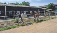 CAV_0810_Reitschultest_Durbach-Ranch-3803 (jpg)