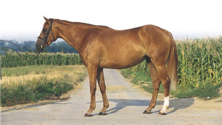 CAVALLO Exterieur-Serie: Vier Experten beurteilen ein Pferd