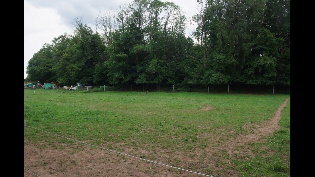 CAV 1011_Reitschultest Pfalz_Claudia-Schoch-05 (jpg)