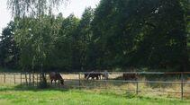 CAV 1011_Reitschultest Pfalz_Ponyfarm-16 (jpg)