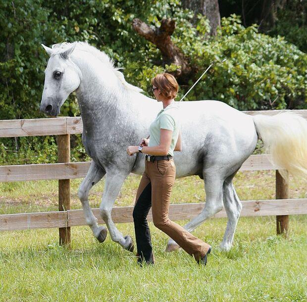 CAV 12_2010 Horsemanship Ausbilder_Reitweisen-Vergleich_Karen-Rohlf_Rasmussen (jpg)
