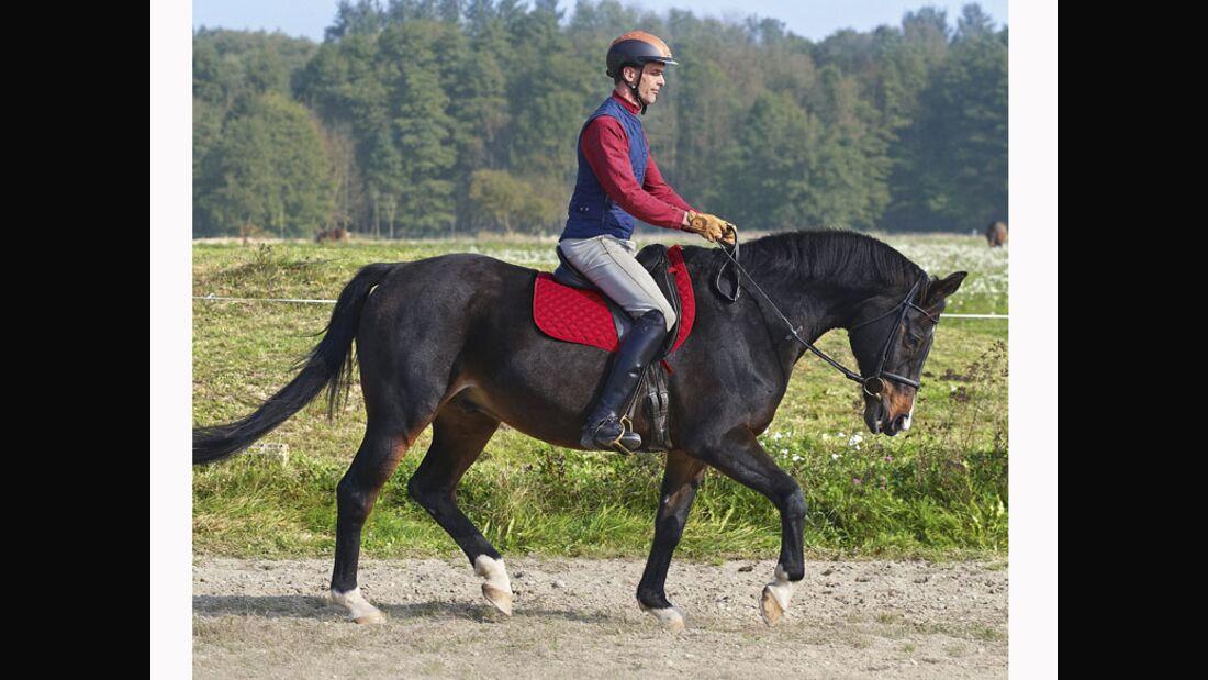 CAV 12_2010-Pferd-locker-reiten_Schoenewald_06 (jpg)