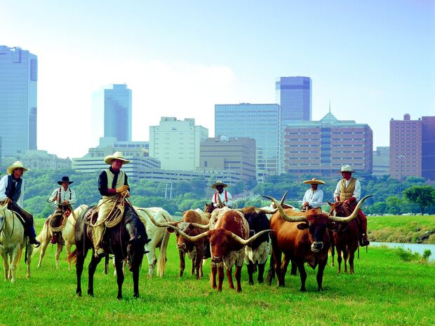 CAV 1210 MS Texas_herd skyline-river (jpg)