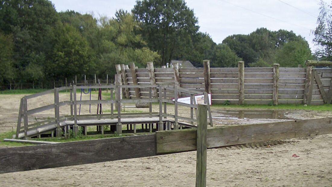 CAV_1210_Reitschultest_Horsefeelings_CIMG7751 (jpg)