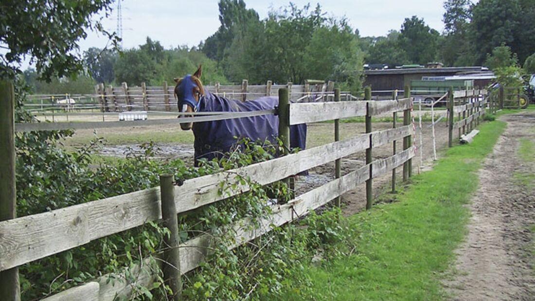CAV_1210_Reitschultest_Horsefeelings_CIMG7756 (jpg)
