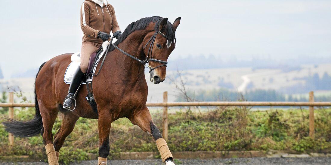 CAV-1211-PferdPur-Bereiten-Rechtsstreit-Pferd